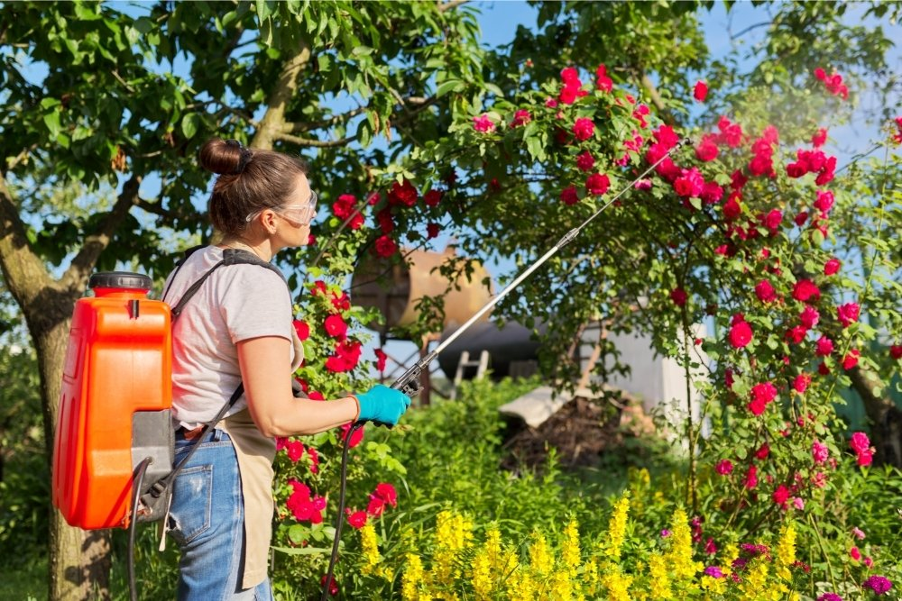 Rose Fertilizers - 11 of the Best, and When To Use Them