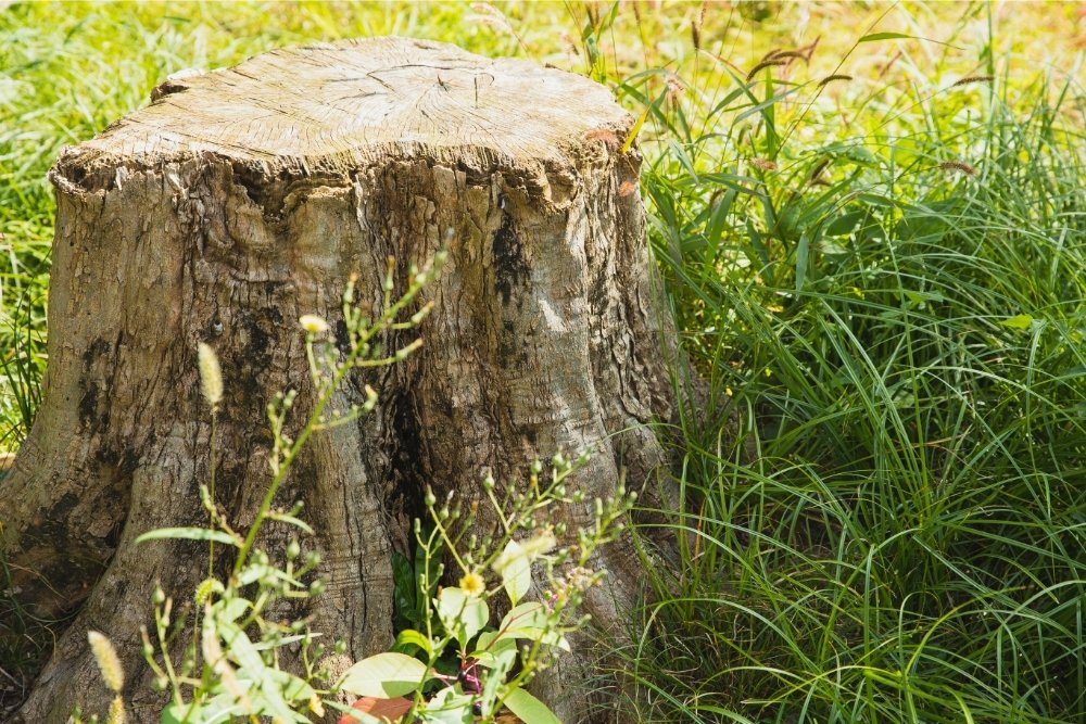 The Ultimate Guide To Killing Tree Stumps – Methods And Stump-Killers